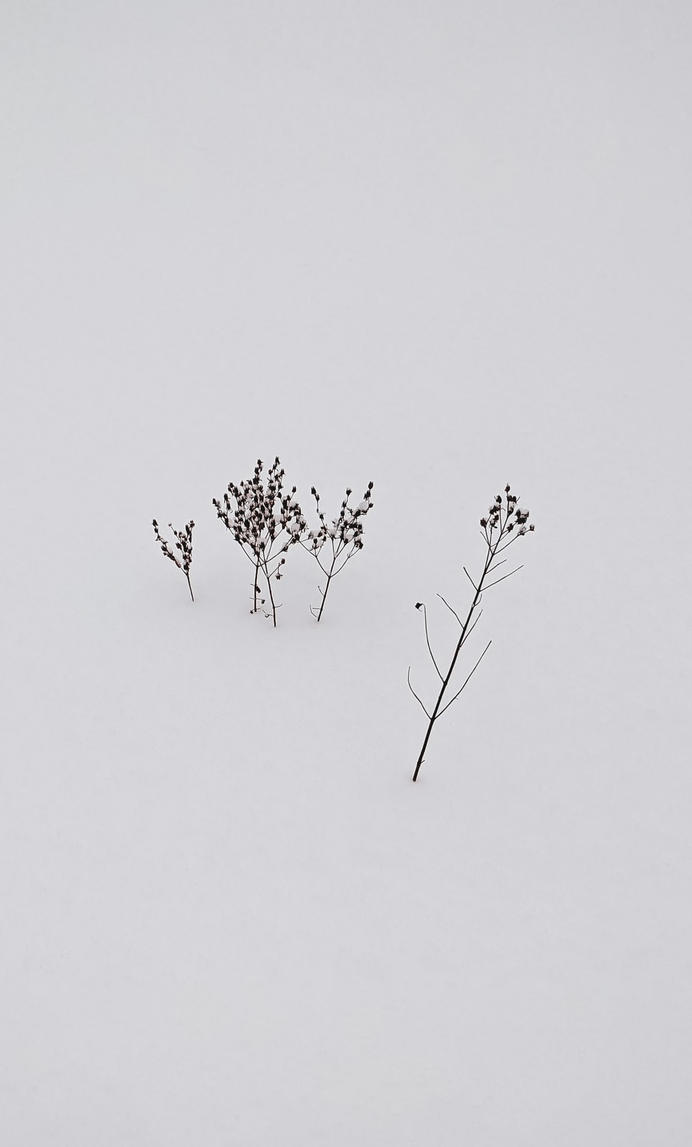 black tree branch on snow covered ground