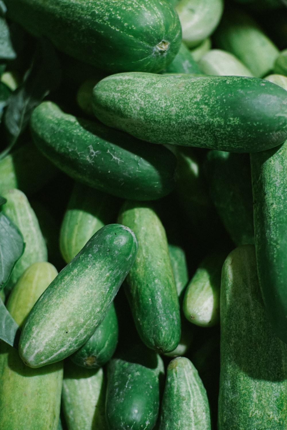 close up photo of green vegetable