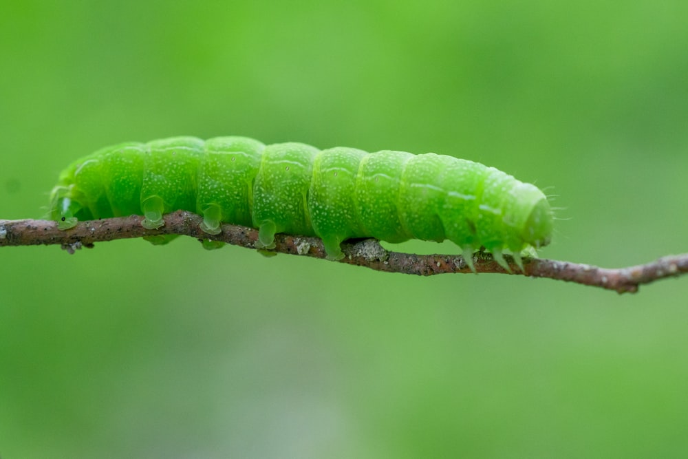 550+ Caterpillar Pictures | Download Free Images on Unsplash