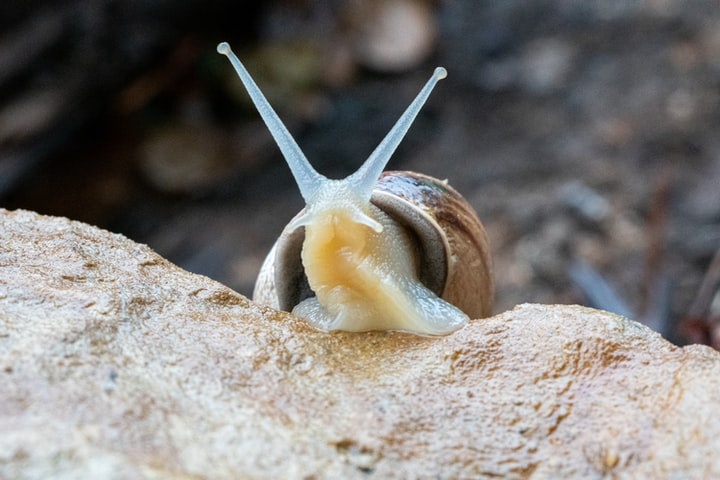 How I Make 6 Figures Writing About Snails