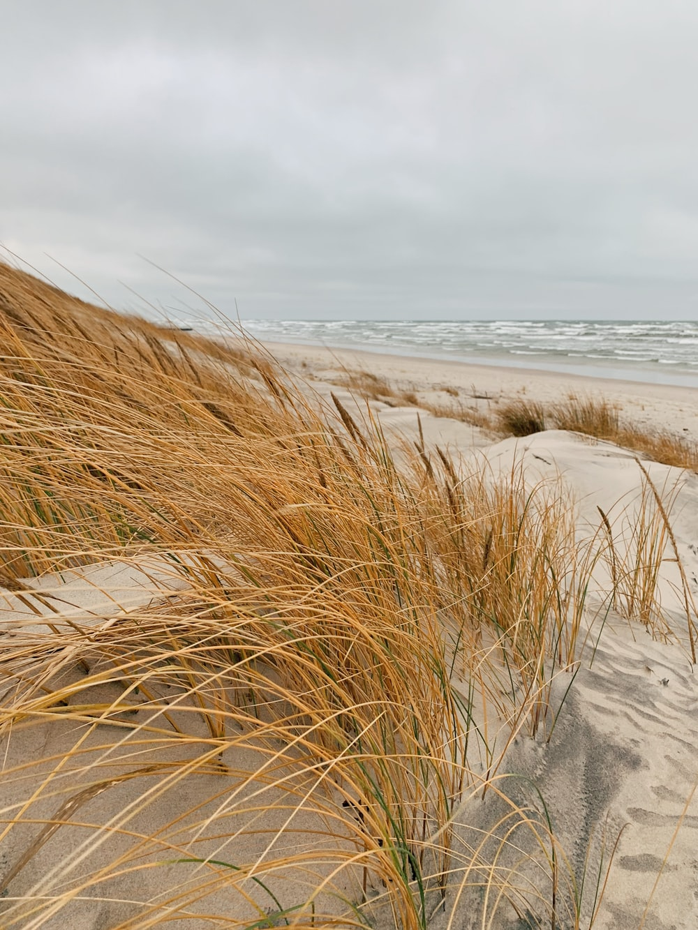 brown grass on gray sand near body of water during daytime