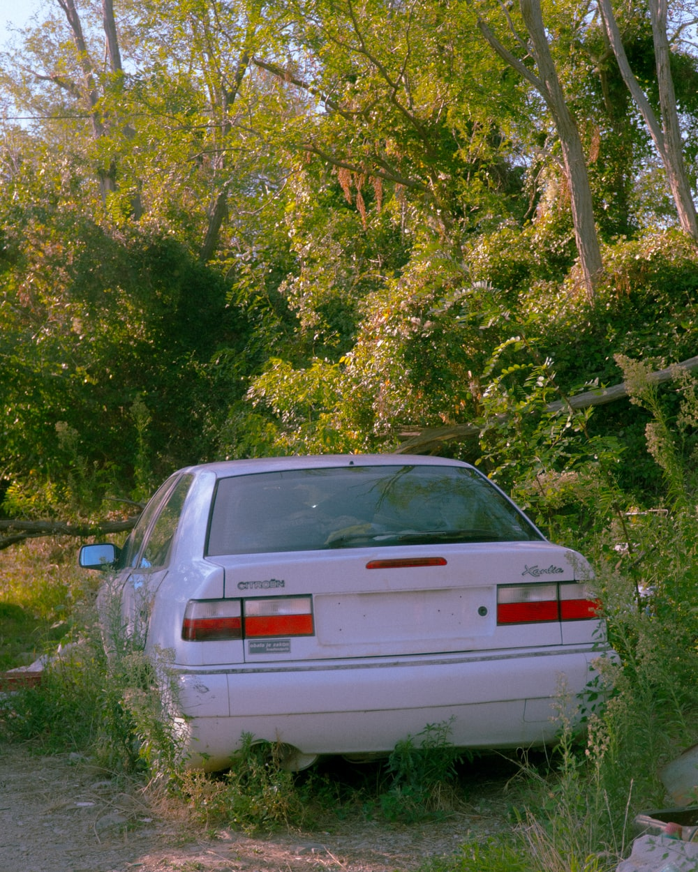 white chevrolet car parked near green trees during daytime