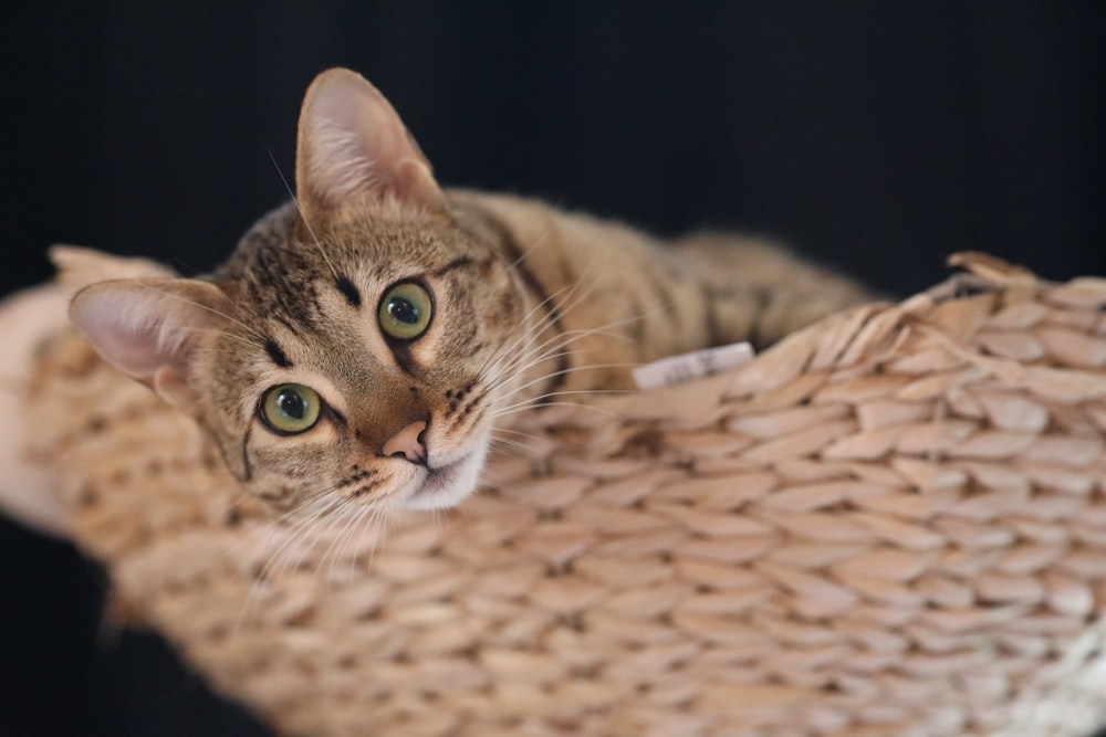 brown tabby cat on brown woven textile