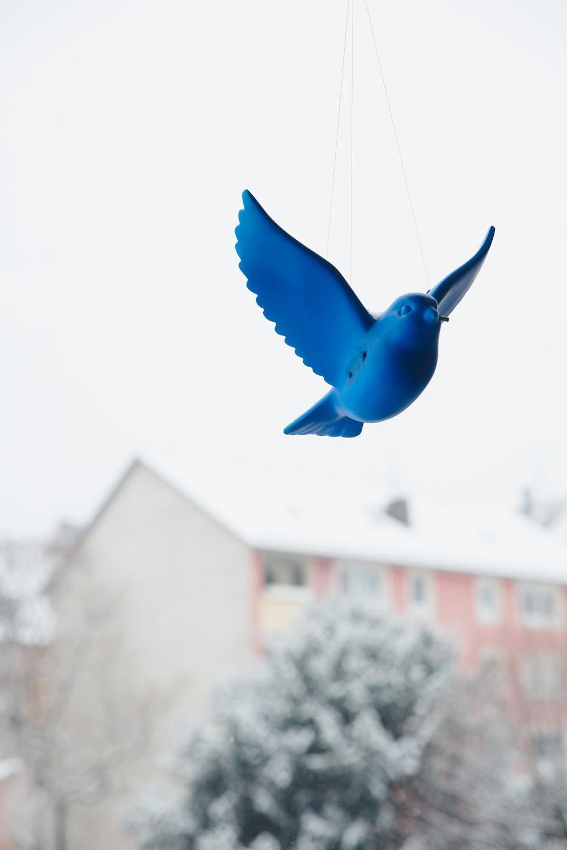 blue bird flying during daytime