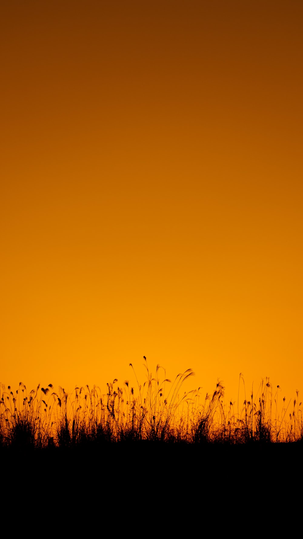 green grass under blue sky during daytime
