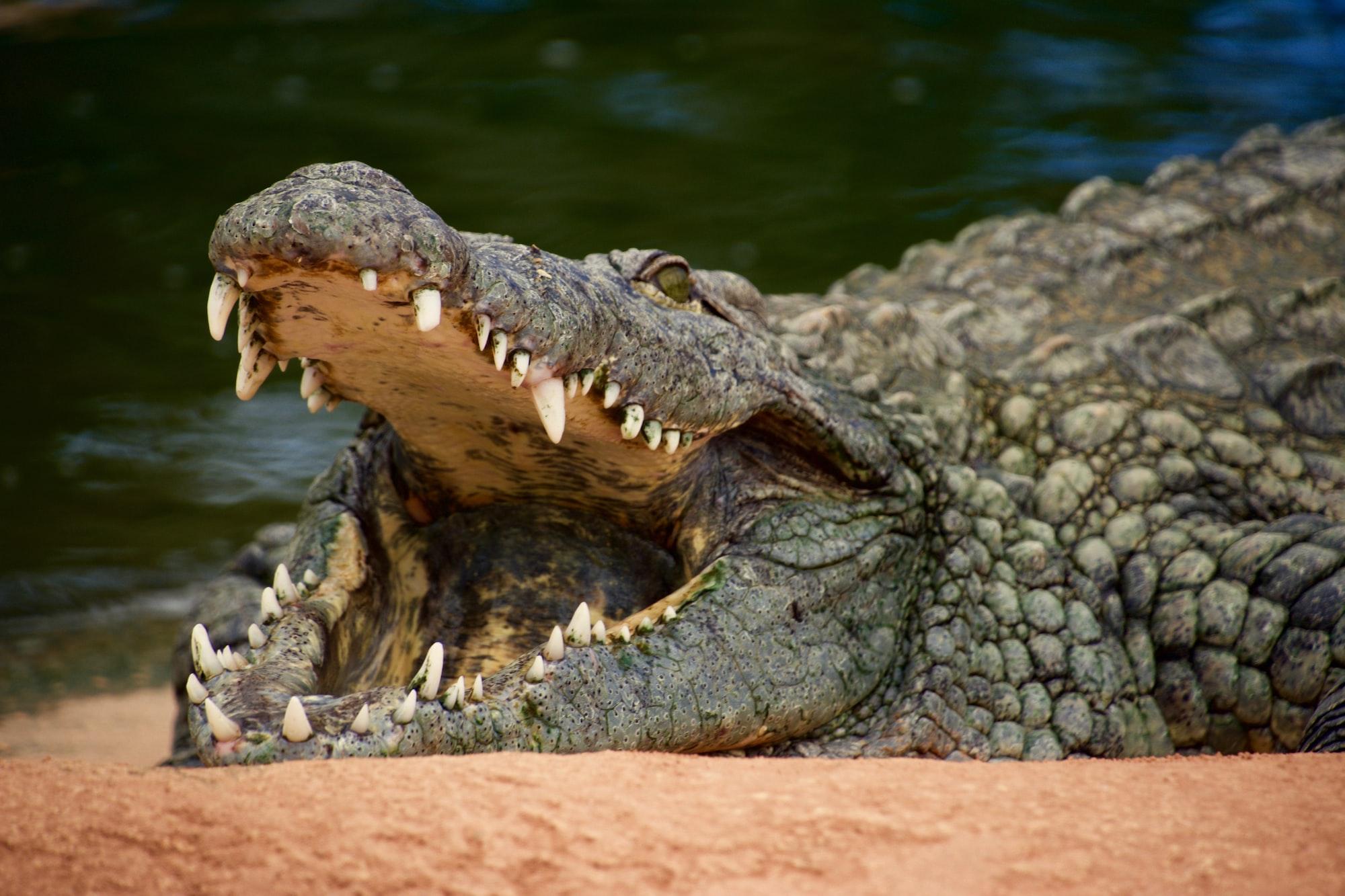 Stop Feeding the Crocodile
