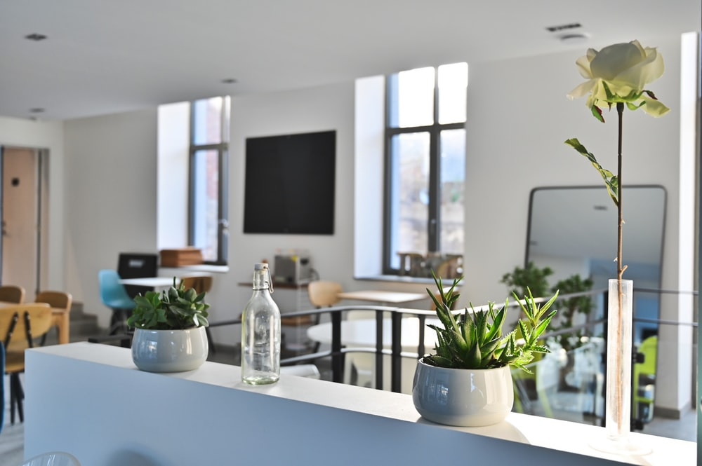 green potted plant on white table