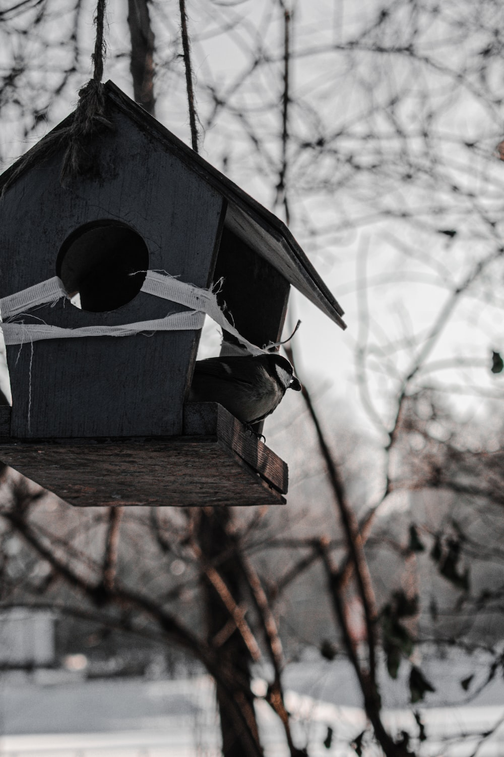 blue wooden bird house on brown tree branch