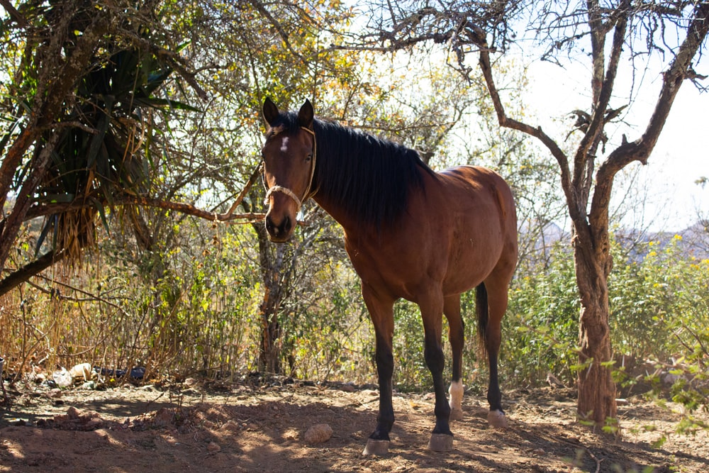 brown horse standing on dirt ground during daytime