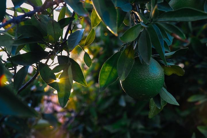 Fruits Secrets