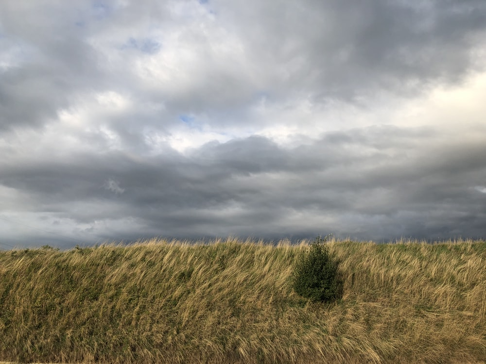 brown grass field under cloudy sky during daytime