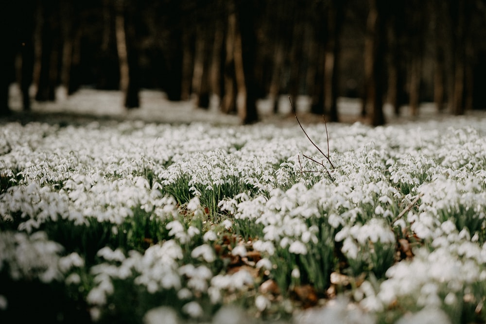 white flowers on forest during daytime