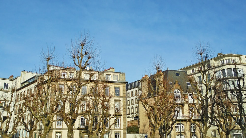 bare trees in front of brown concrete building during daytime