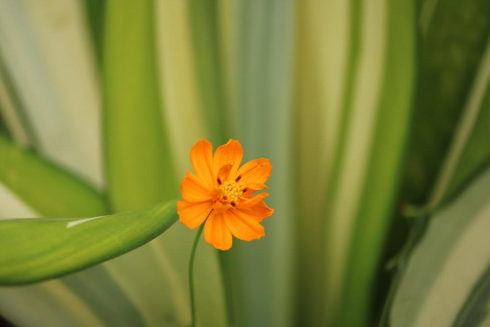 orange flower in shallow focus lens
