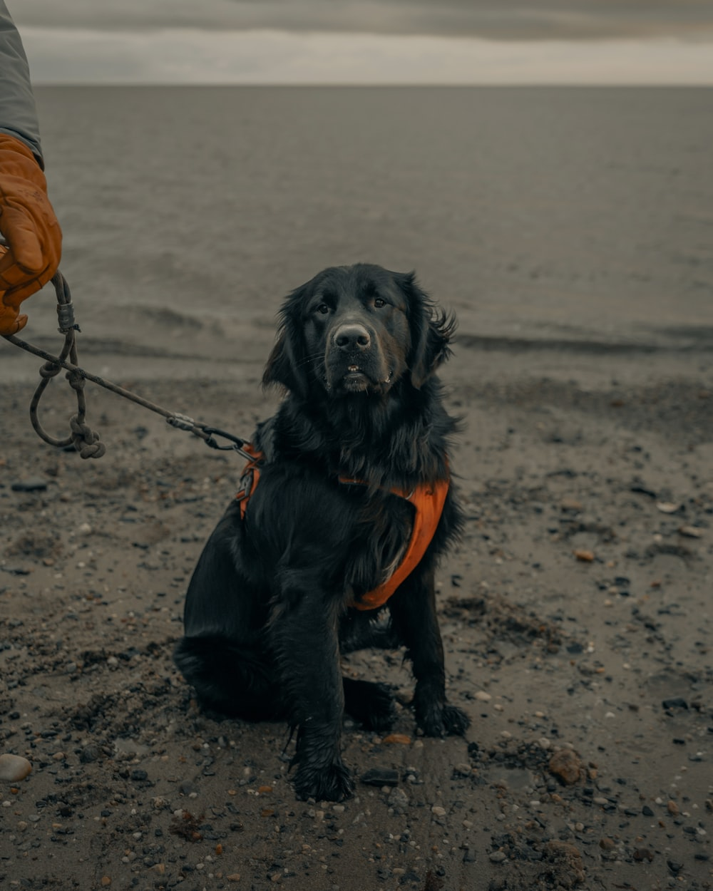 black long coated dog with orange shirt and black pants sitting on brown sand during daytime