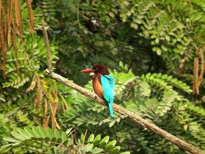 Guwahati blue and brown bird on brown tree branch during daytime