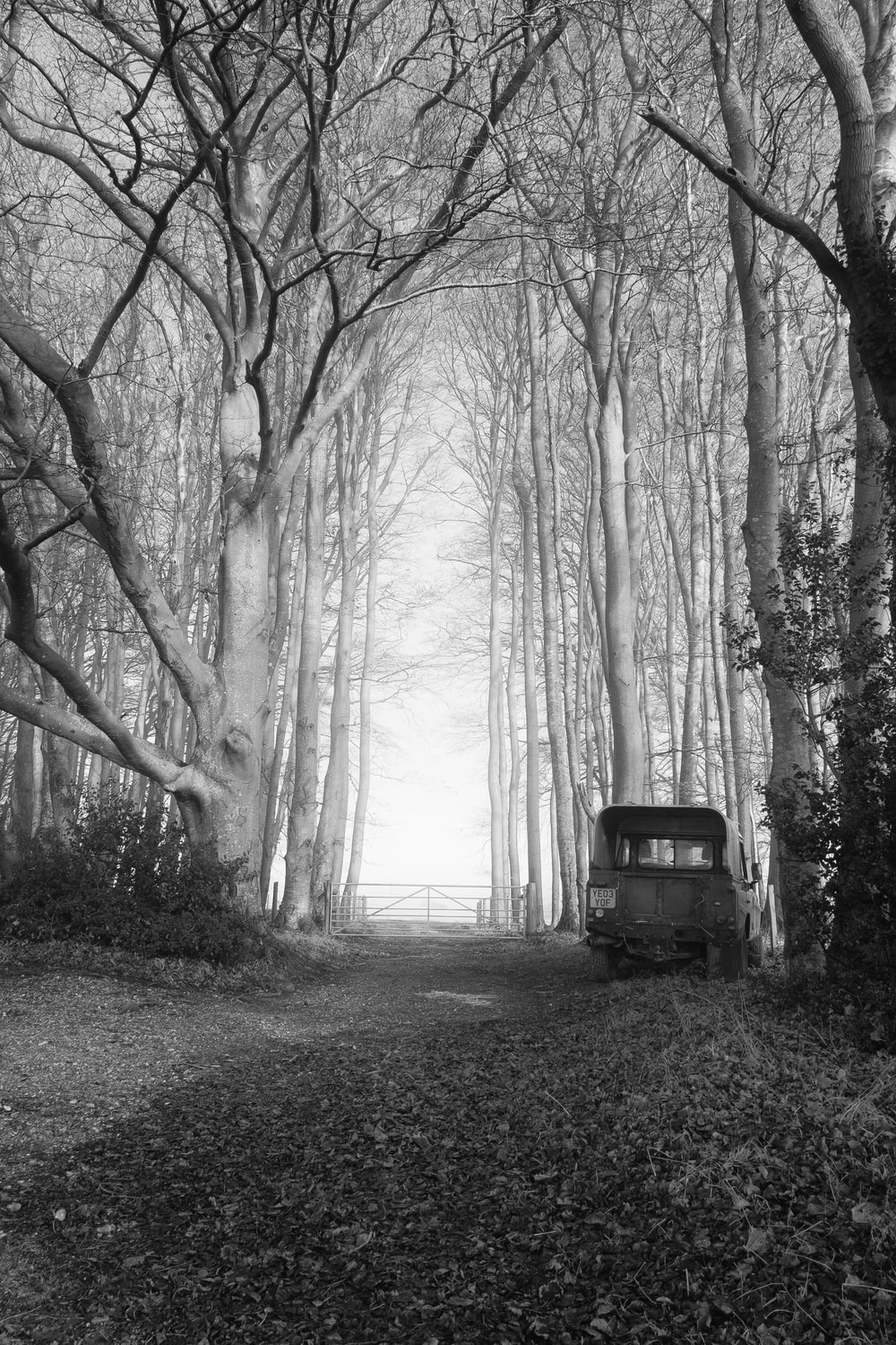 grayscale photo of car in forest