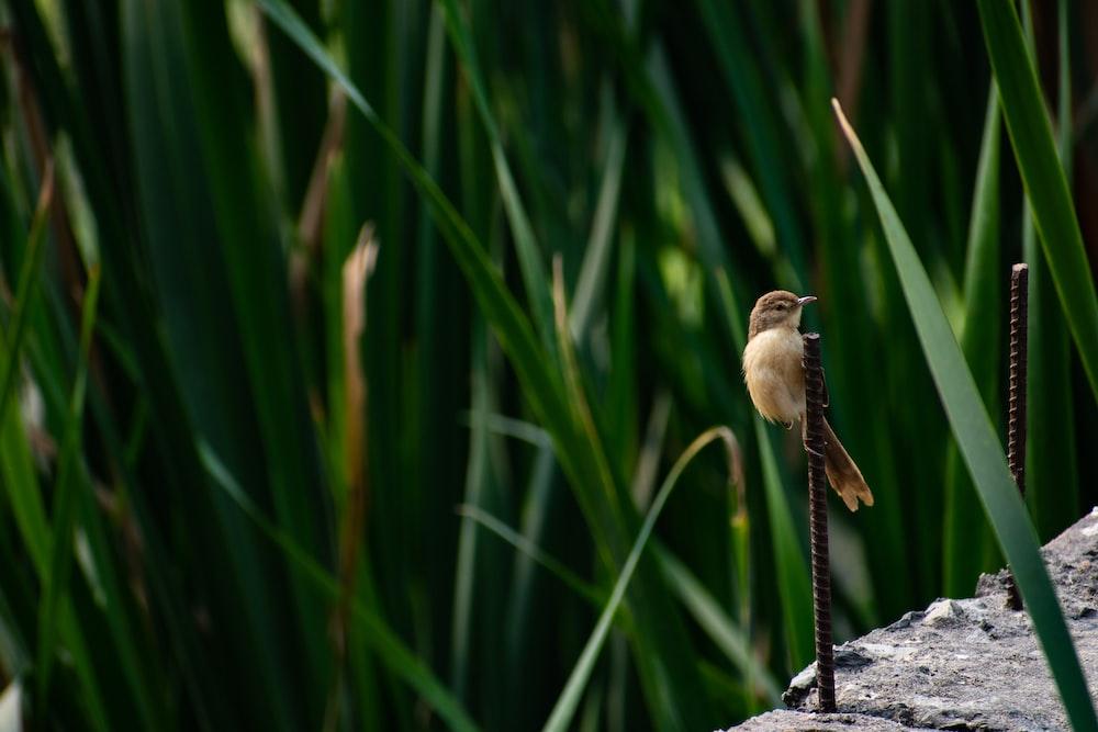 brown bird on black rock