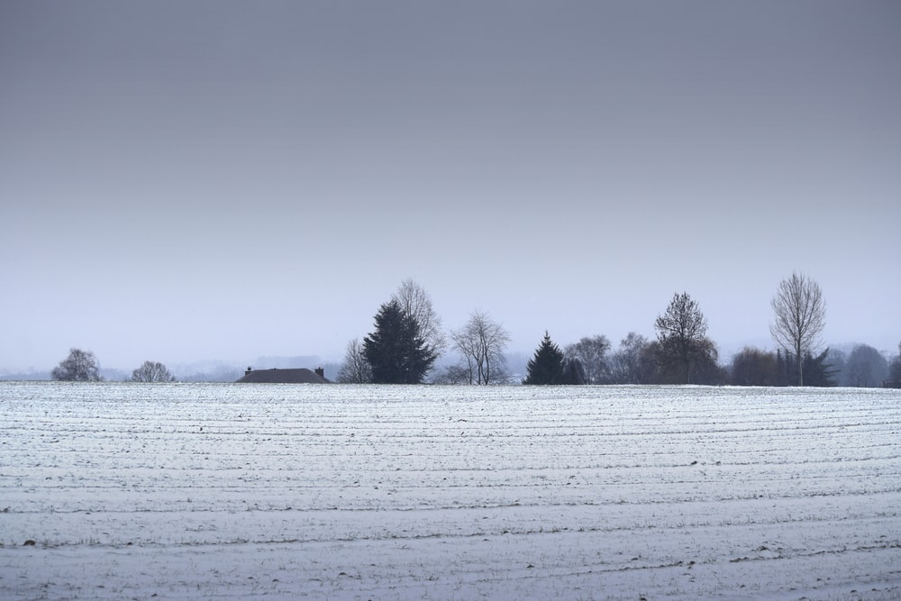 snow covered field and trees during daytime