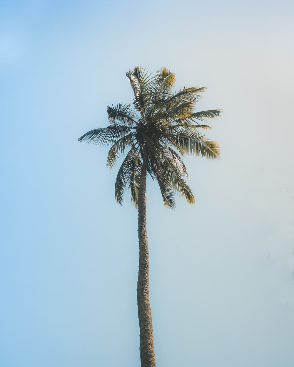 green palm tree under white sky