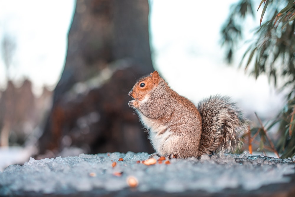 brown squirrel on gray concrete pavement during daytime