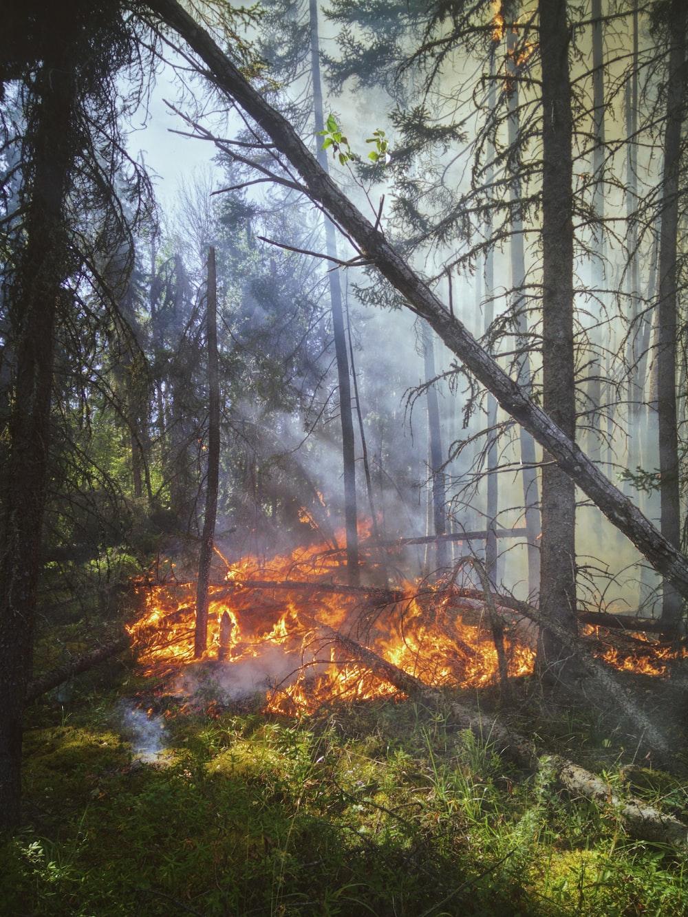 burning woods during night time