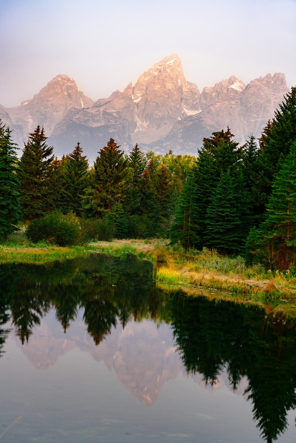 green pine trees near lake and mountain range