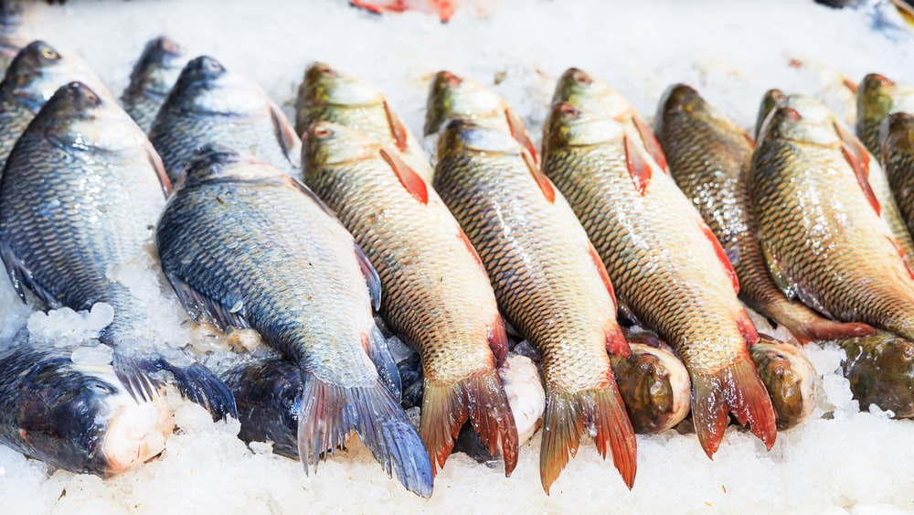 silver and red fish on ice