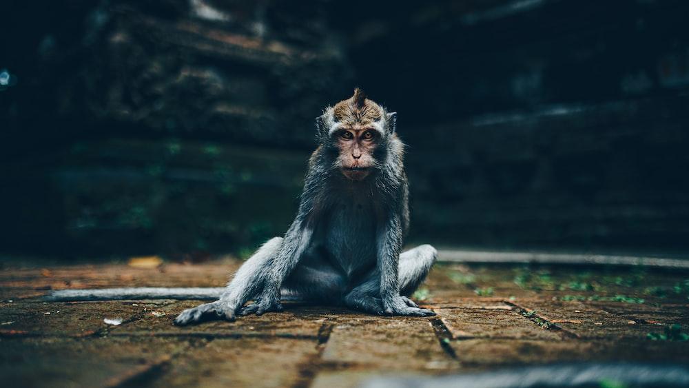 gray monkey sitting on brown wooden log during daytime