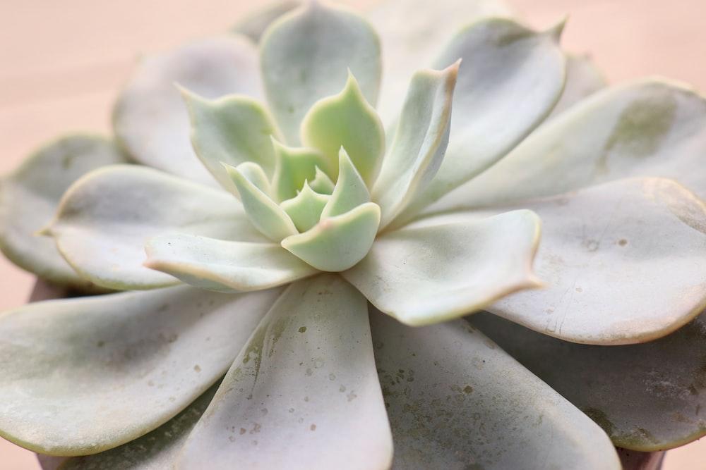 white and green flower in macro lens