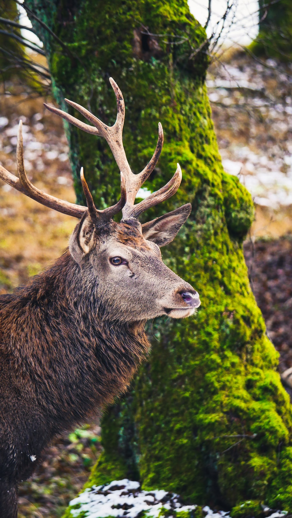 brown deer in forest during daytime