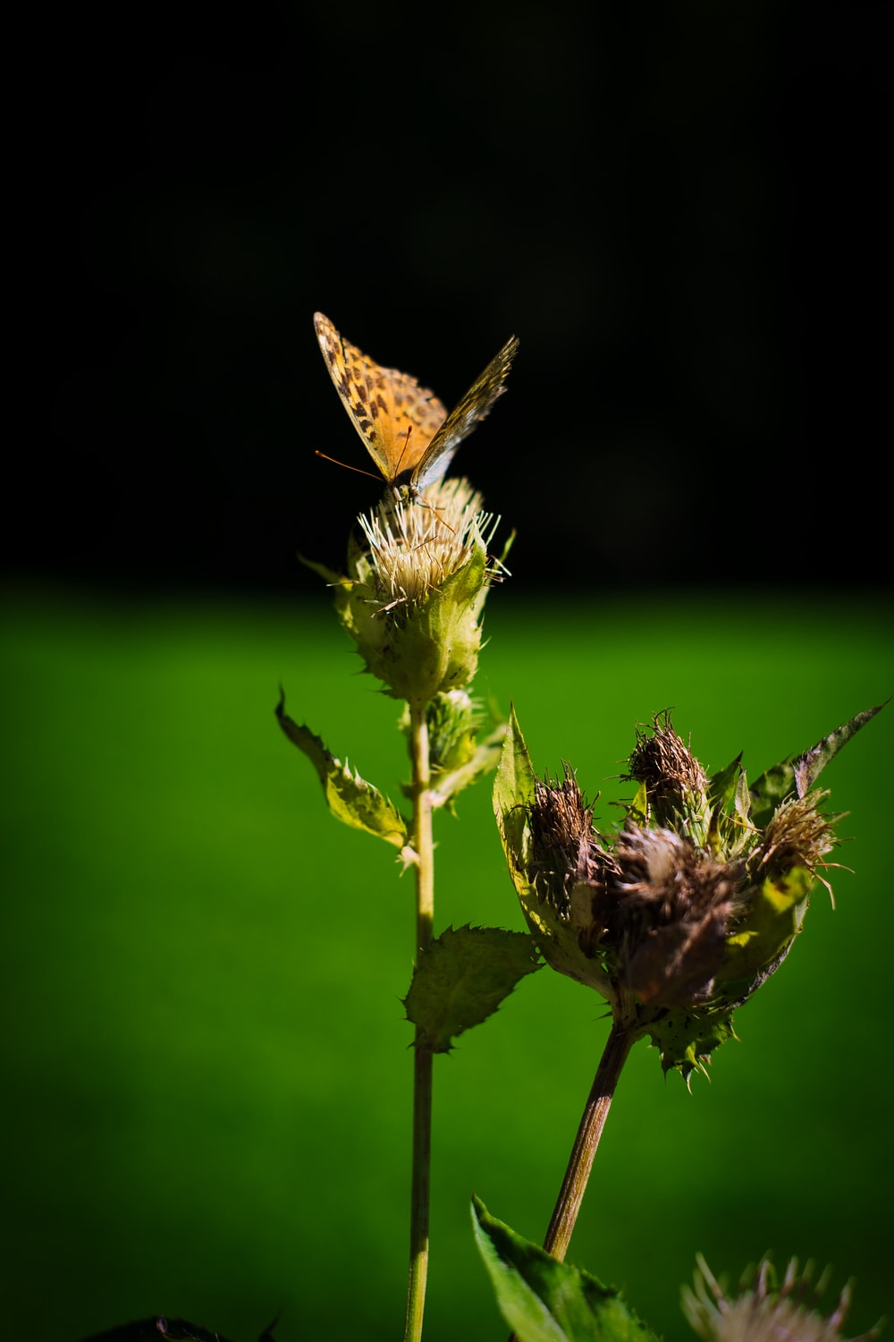 brown butterfly perched on green plant during daytime