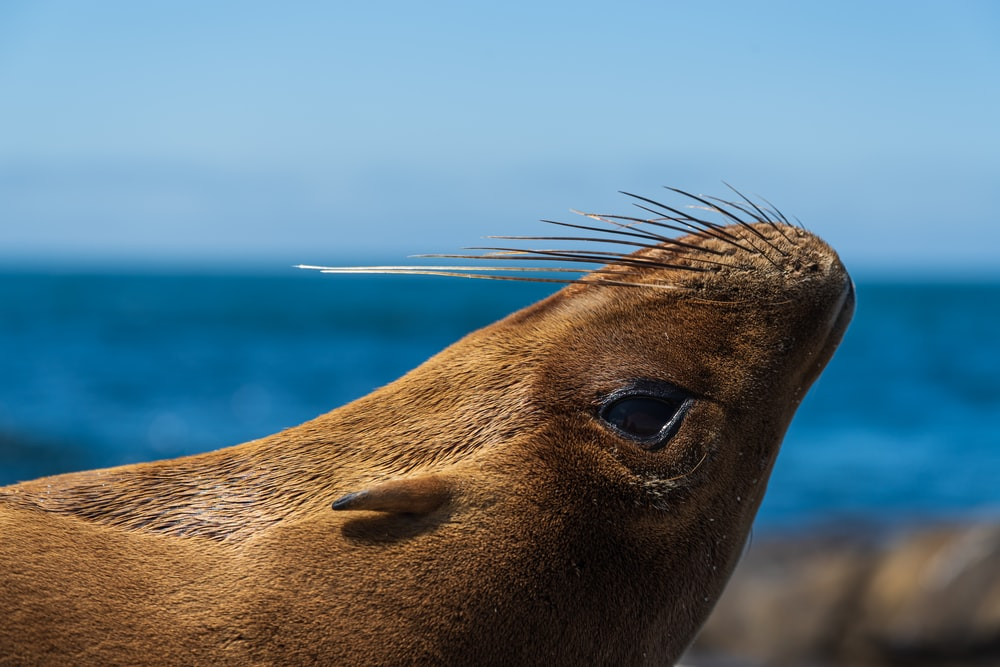 sea lion on blue sea during daytime