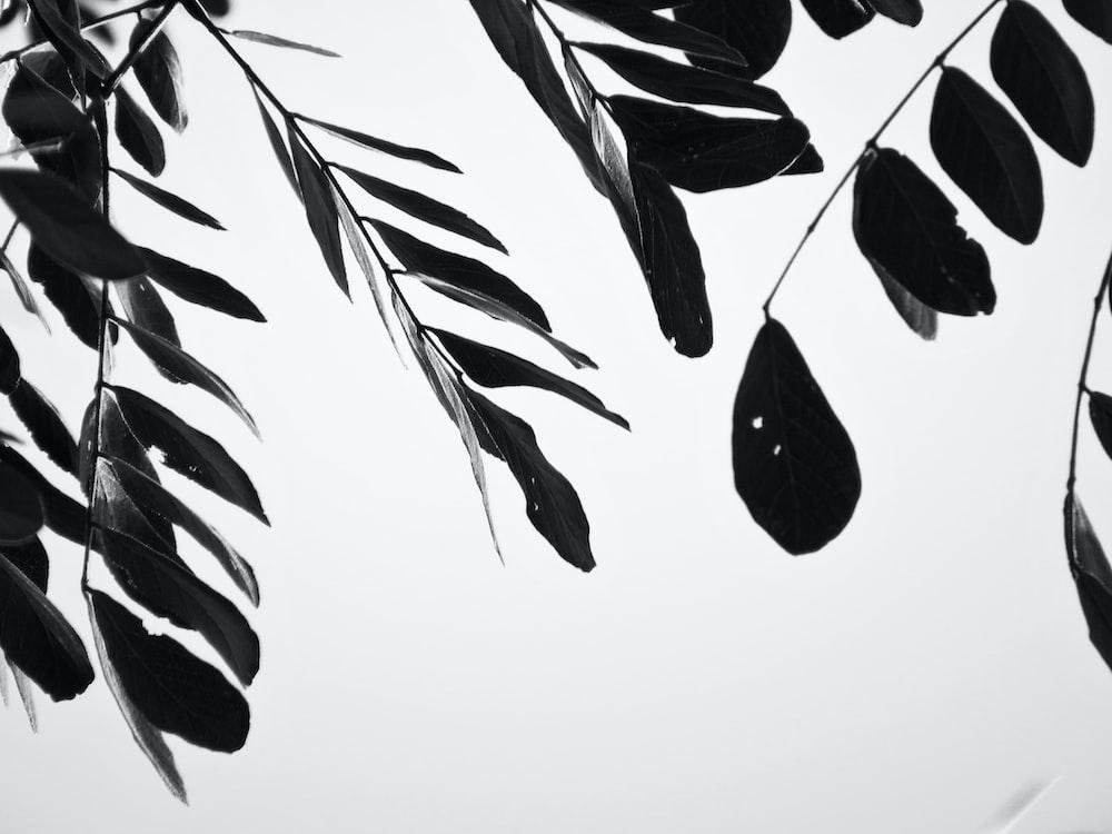 black and white leaves illustration