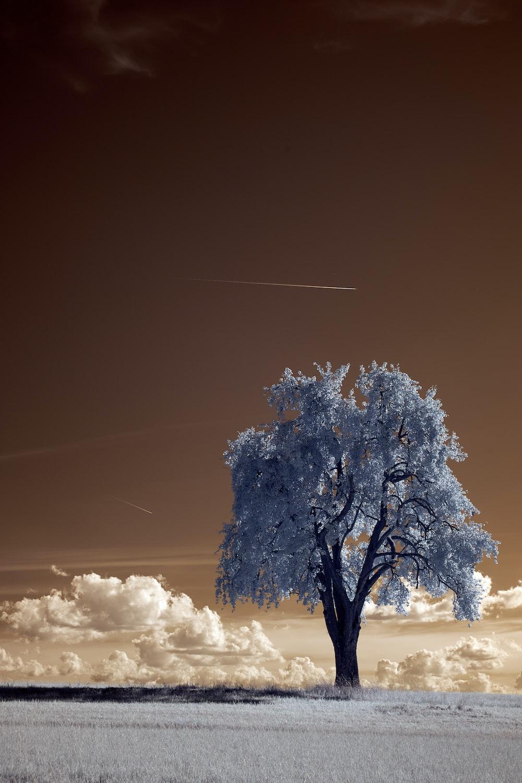 white tree under white sky