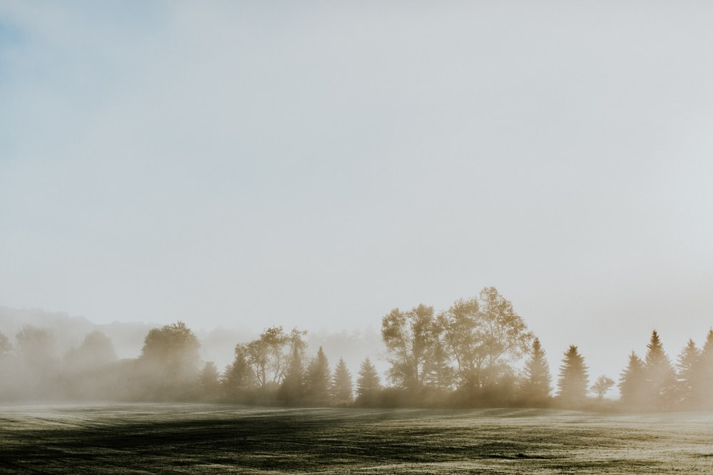 green grass field with fog during daytime