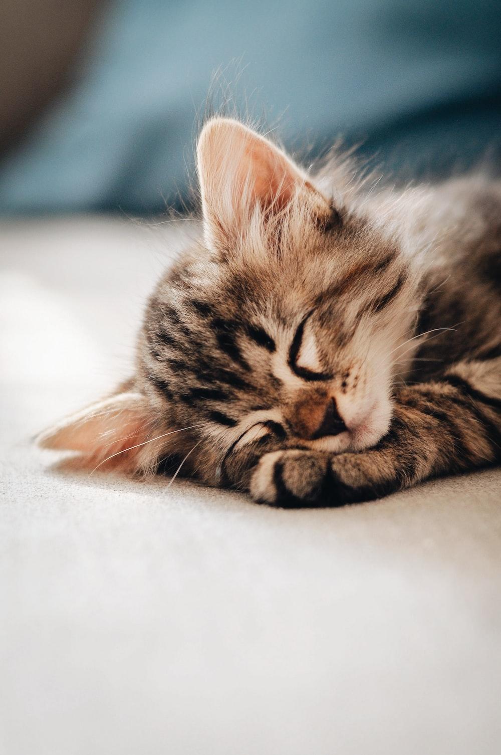 brown tabby kitten lying on white textile
