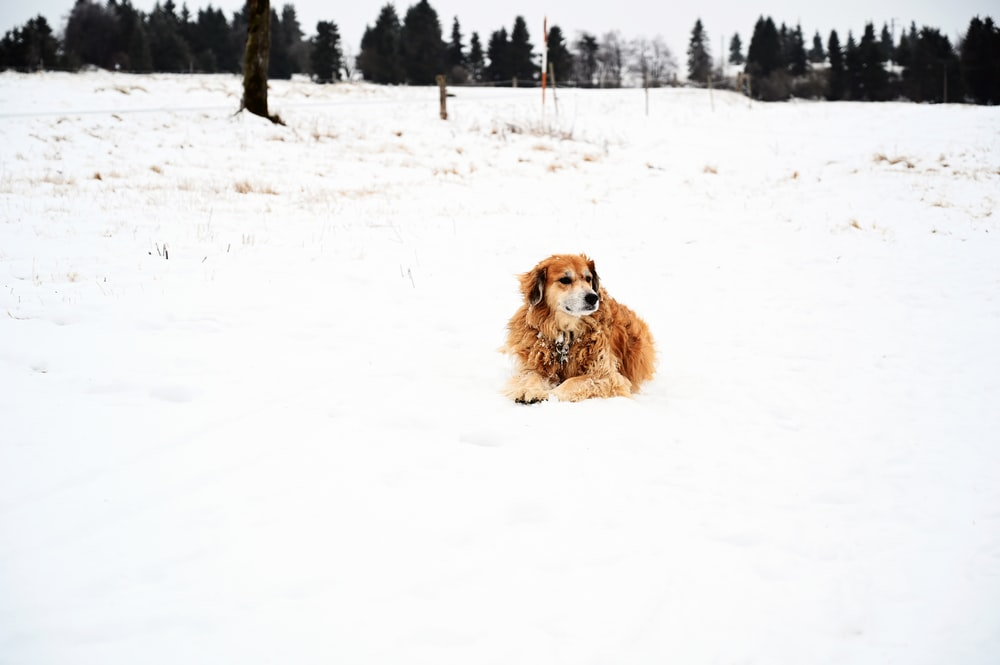 brown long coated dog on snow covered ground during daytime