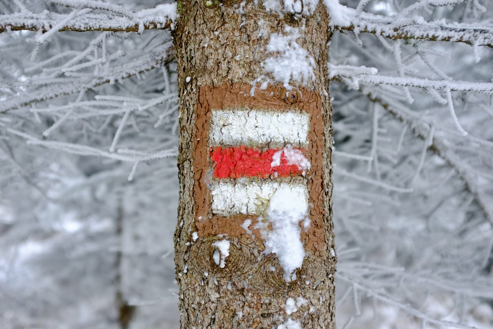 brown tree trunk with red and white arrow sign