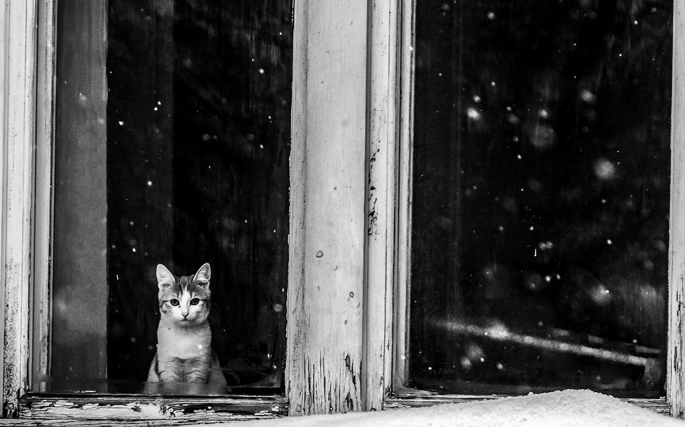 grayscale photo of cat looking at the window