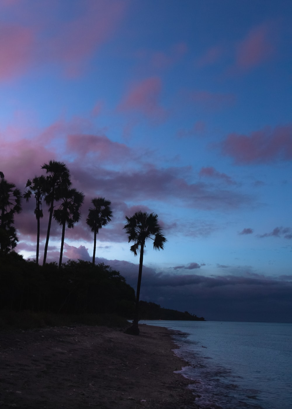 palm trees near body of water during sunset