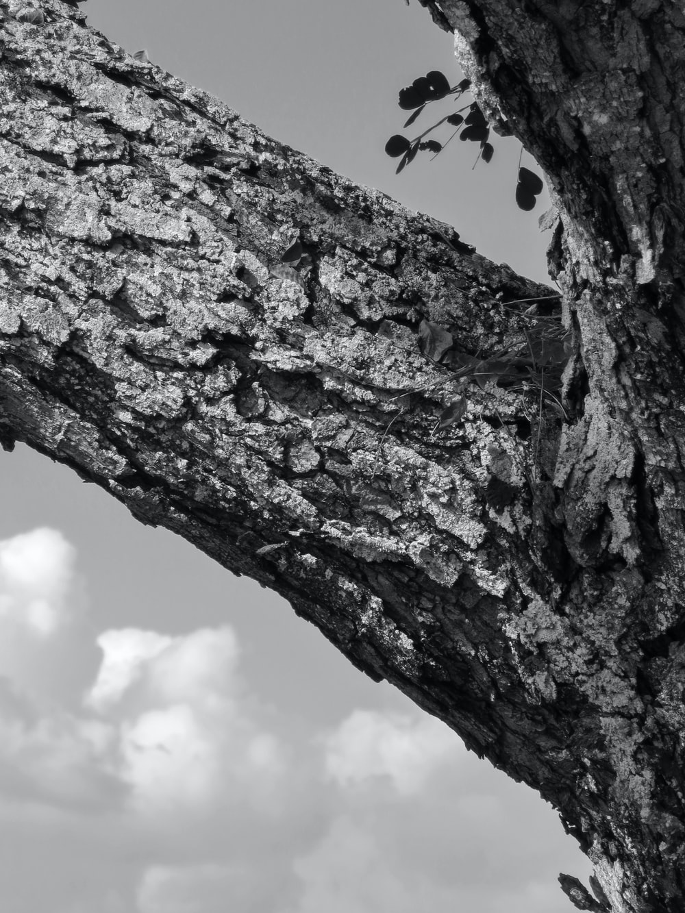 grayscale photo of tree trunk