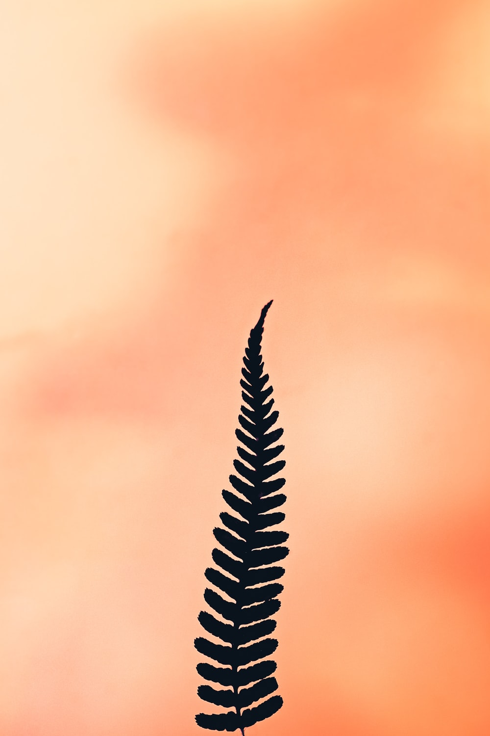 black and white feather in close up photography