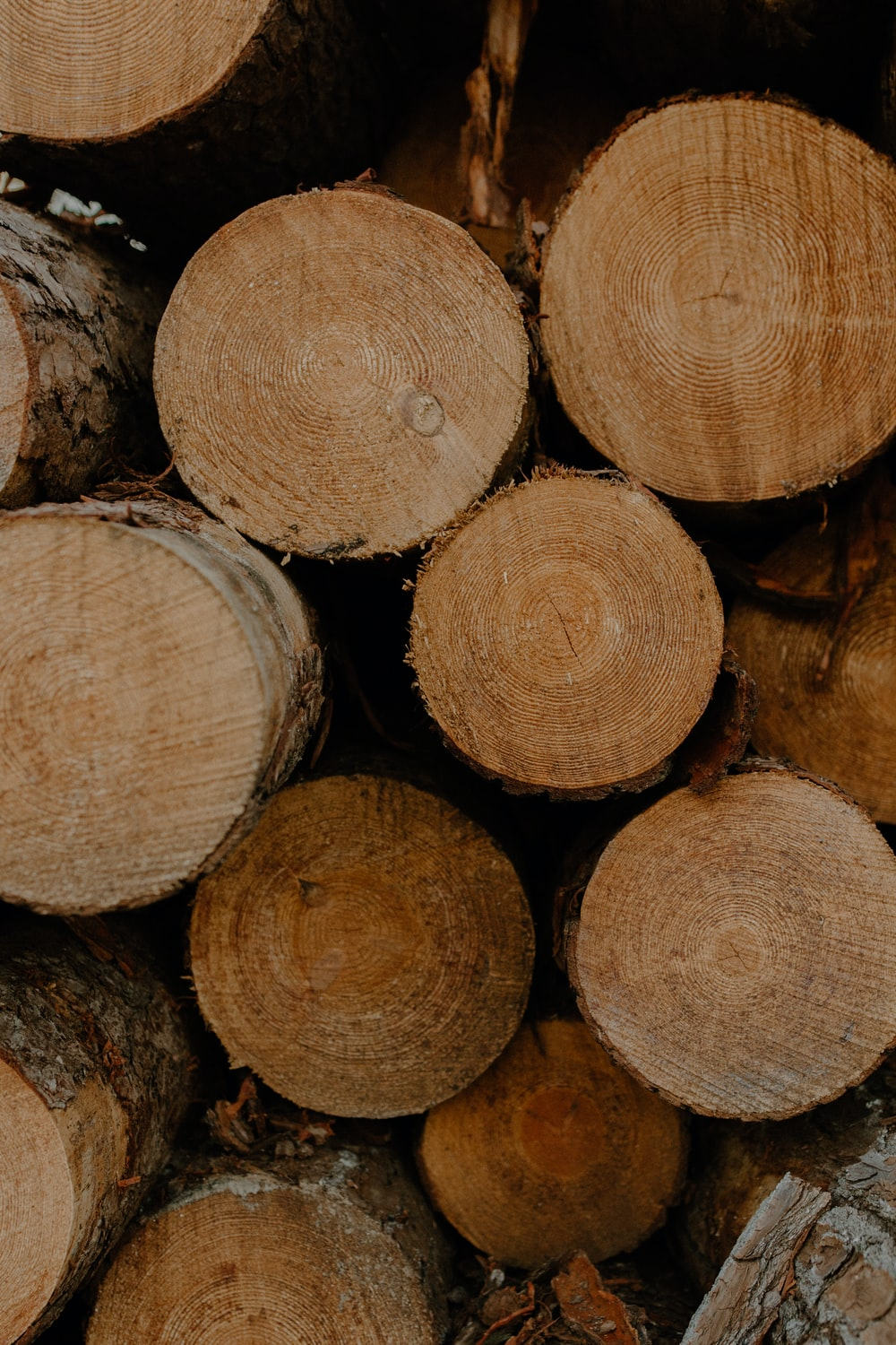 brown tree logs in close up photography