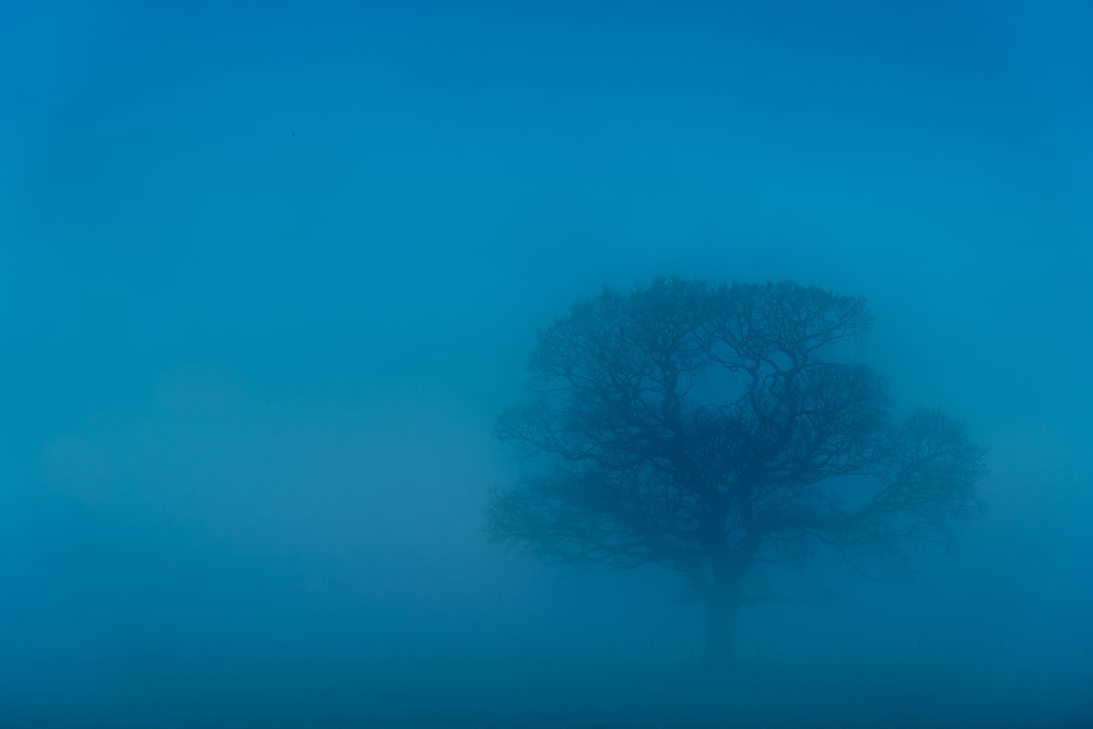 black bare tree under blue sky