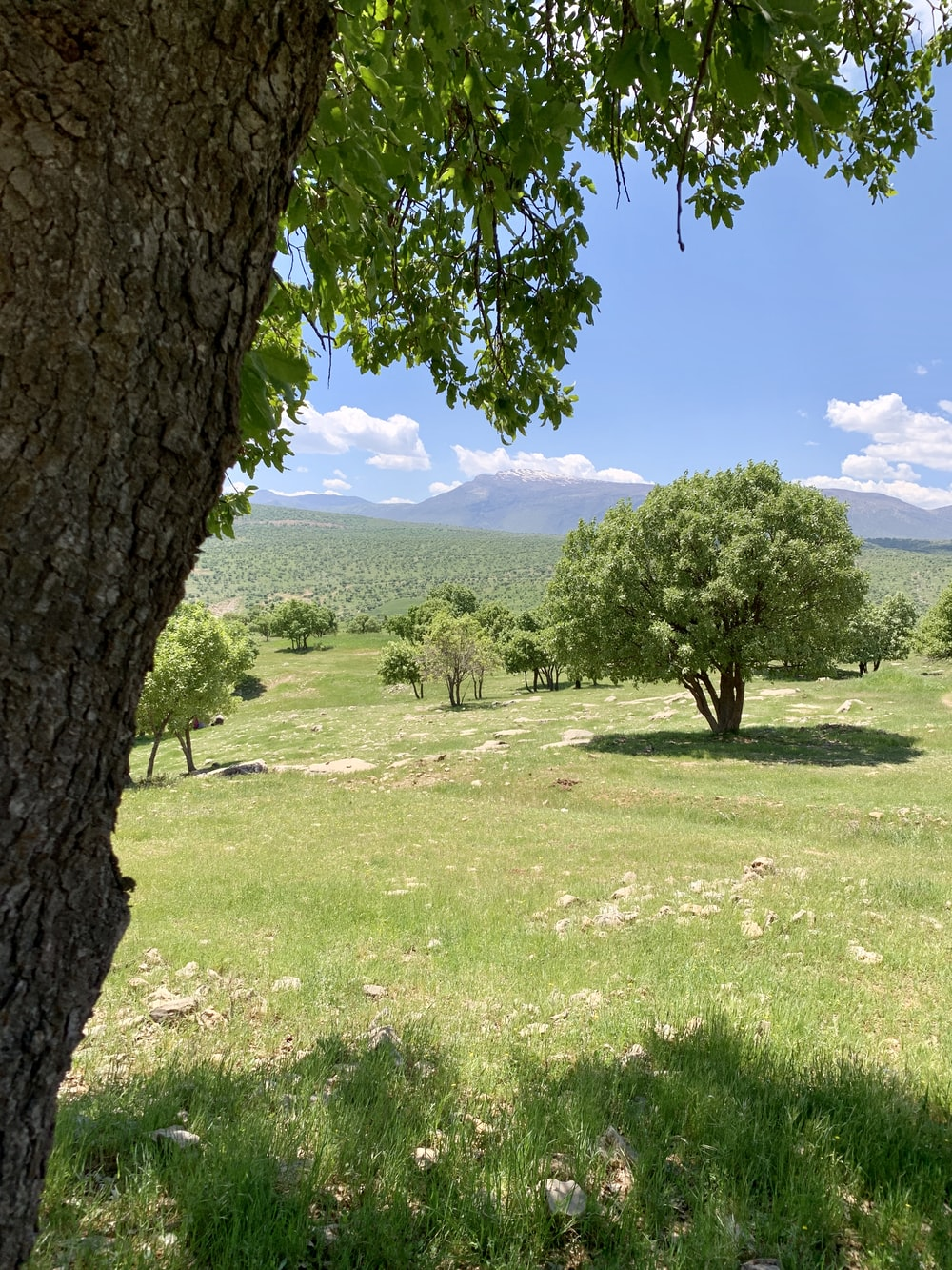 green grass field with green trees and mountain in distance