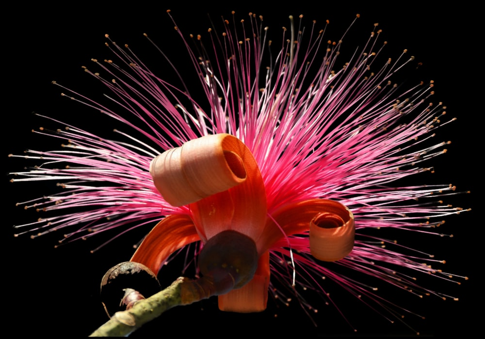 pink and white fireworks display