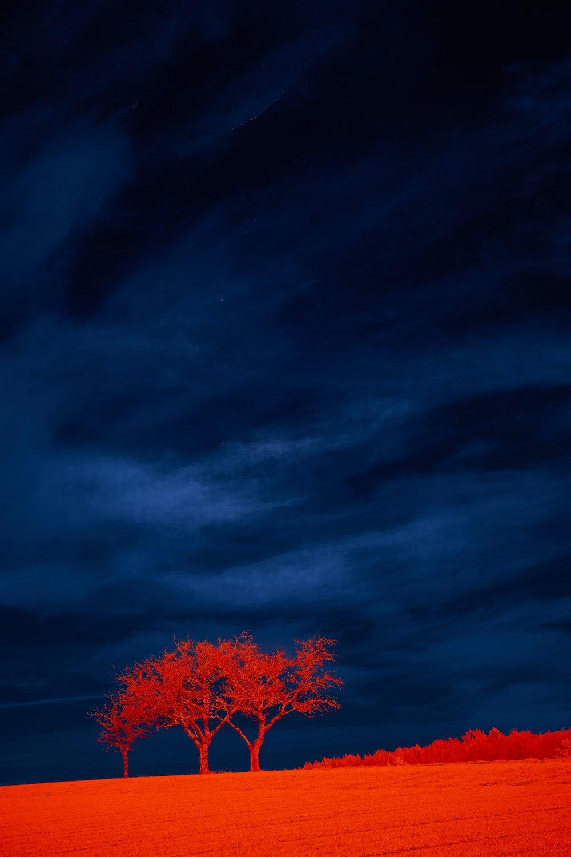 red leaf tree under blue sky