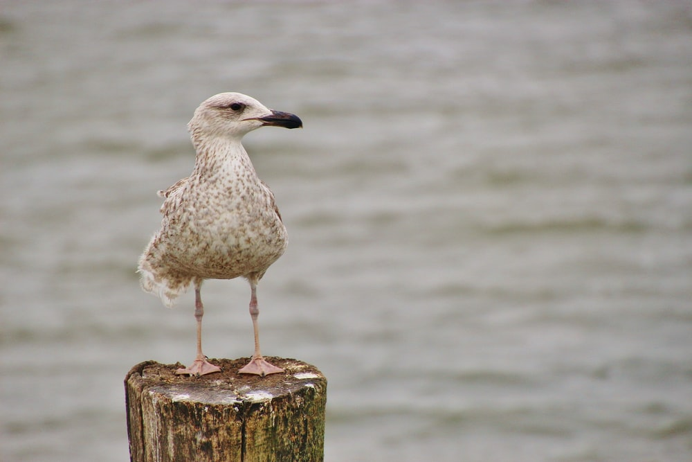 white and gray bird on brown wooden post