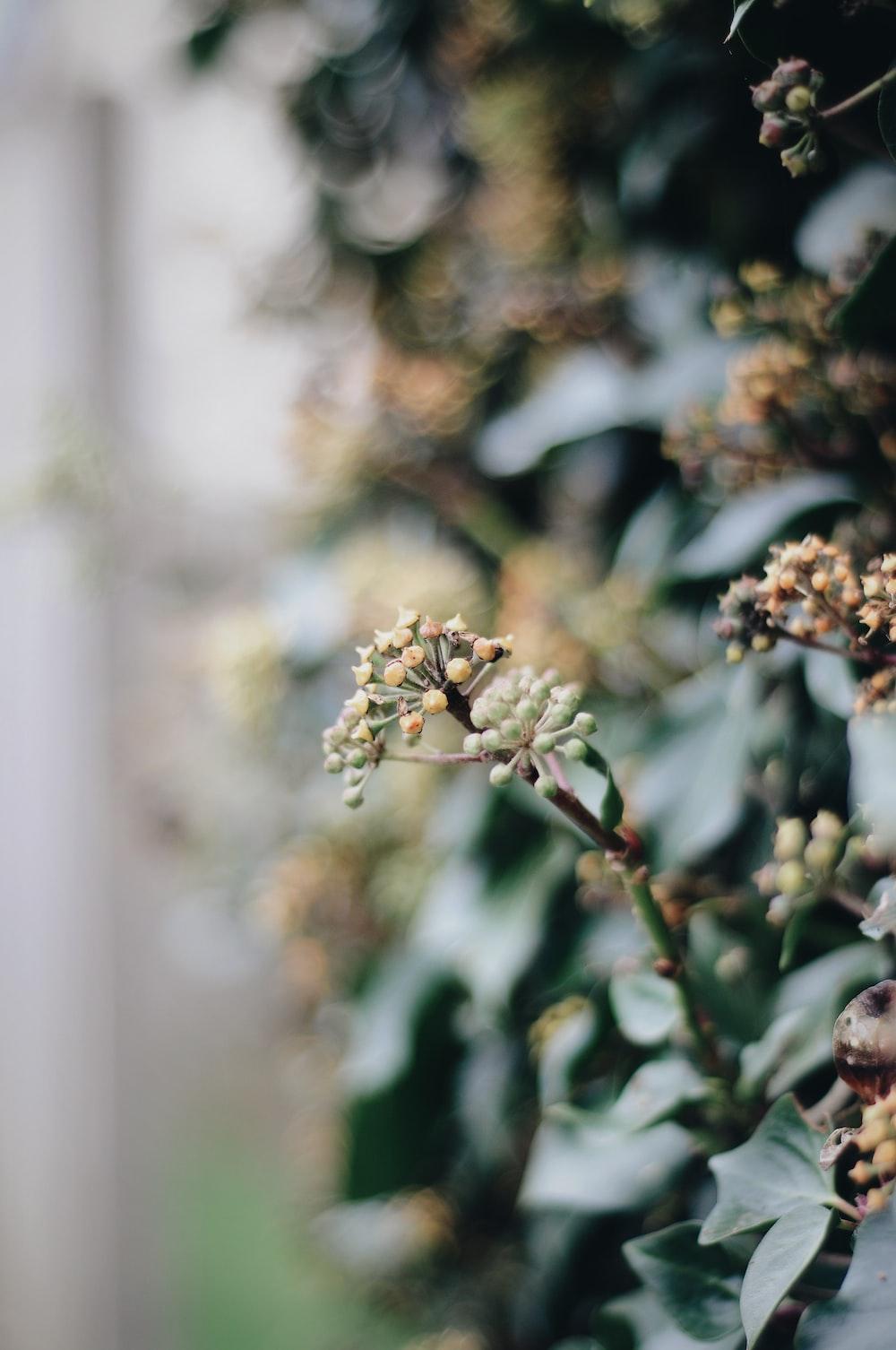 white and green flower in tilt shift lens